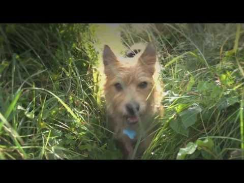 Dog friendly holidays in Cornwall, a video guide