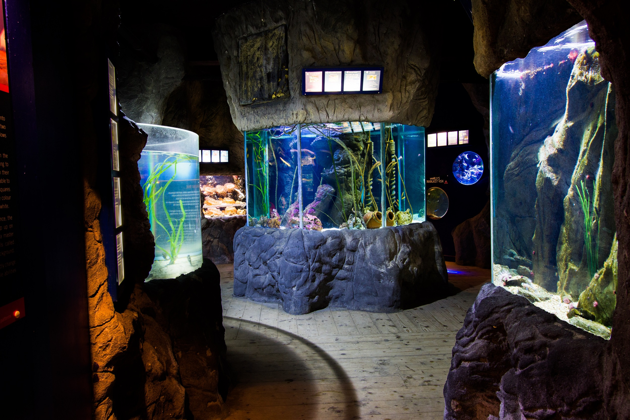 Things to do in newquay - blue reef aquarium