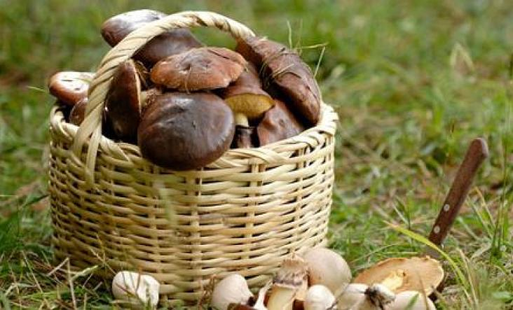 Autumn skills | Foraging | Cornwall