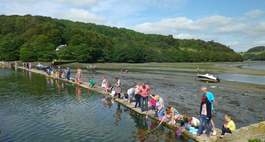 Crabbing at the Millpool in Looe, Cornwall
