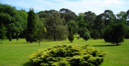 Gardens in Cornwall, Pinetum Park & Pine Lodge Gardens, St Austell, c Mark Percy