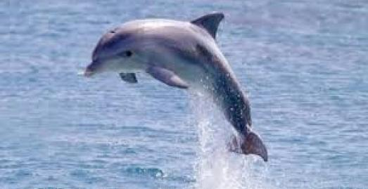 National Marine Week, What's on, Dolphins, Cornwall