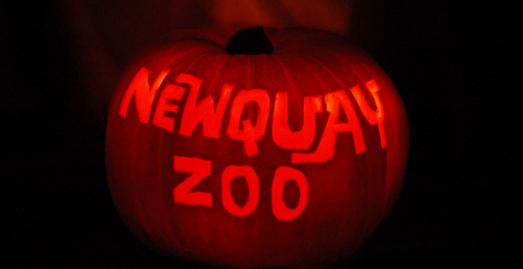 Newquay Zoo, Halloween, What's on, North Cornwall, Family