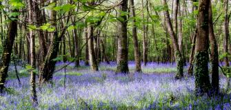 Blooming Marvellous, Cornwall, bluebells, gardens, holiday