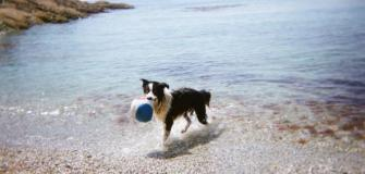 Dogs love Cornwall, dog friendly beaches, Visit Cornwall, holiday