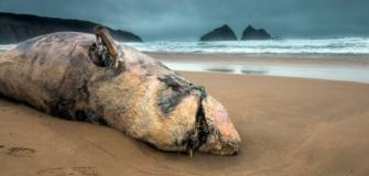 Marine Strandings Appeal, Wildlife Trust, Visit cornwall, charity, good cause