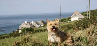 Dog friendly attractions, family holidays, Visit Cornwall