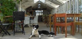 Dogs love Cornwall, dog friendly places to eat, Visit Cornwall, holiday