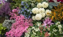 Cornwall Spring Flower Show,  Visit Cornwall, What's On 2020
