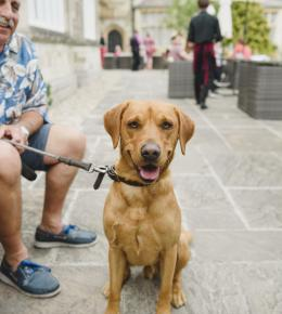 dog-friendly-stays-at-the-alverton-hotel-truro-cornwall