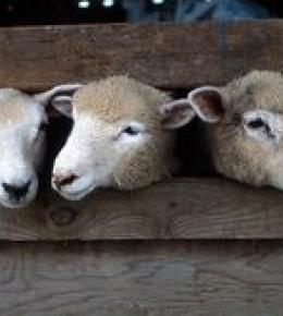 The Olde House - Ewes