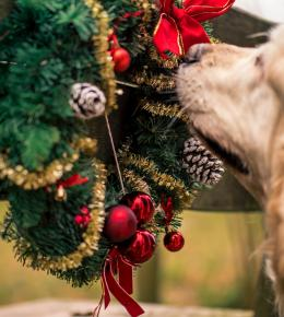 Christmas Dog Friendly | The Valley