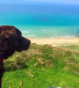 Dogs FREE at Roselands caravan park Land's end , Cornwall