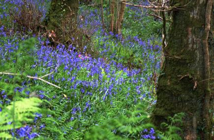 Things to do in Cornwall   Carnglaze Slate Caverns and Woodland Garden   St Neot    Cornwall