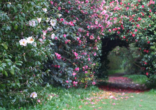 Gardens in Cornwall   Antony House and Garden   Torpoint