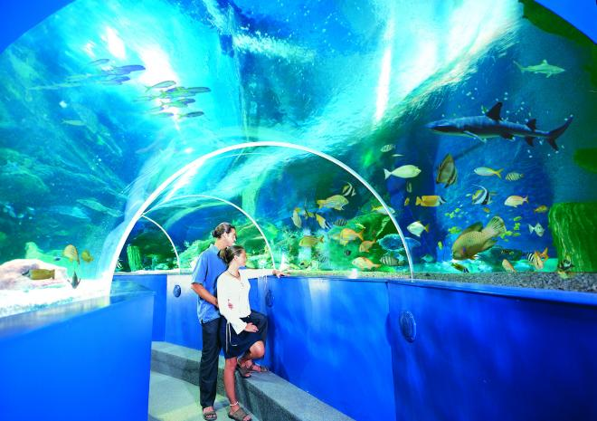 Blue Reef Aquarium, Newquay, Cornwall