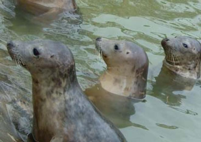 Gweek Seal Sanctuary, Lizard Peninsula, West Cornwall