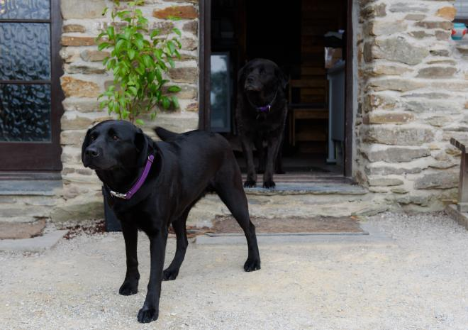 Dogs at Kilminorth Cottages