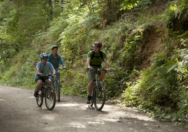 Three people cycling along a forest road