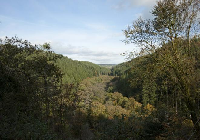 Panorama of the valley of Cardinham Woods