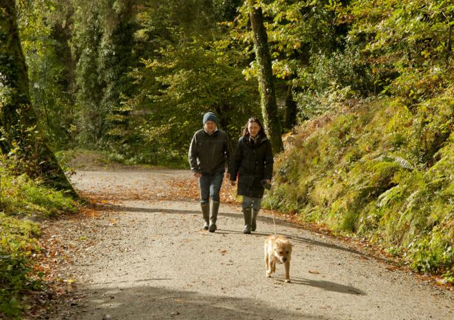 A man and woman walking along a forest road with a small white dog