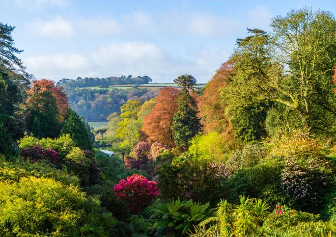 The view looking down the valley at Trebah Garden