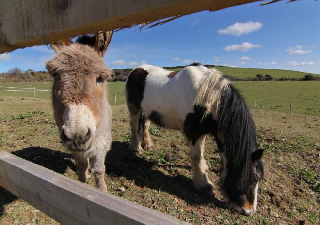 Animals at Merlin Farm Holiday Cottages Cornwall