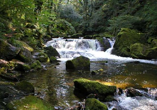 Visit the beautiful Golitha Falls just down the lane