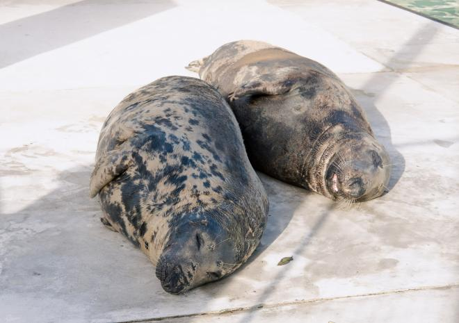 Things to do in Cornwall | Cornish Seal Sanctuary | Gweek | Cornwall