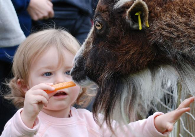 Fun Farm Paradise Park and JungleBarn, Things to do,  Hayle,  St Ives, Cornwall