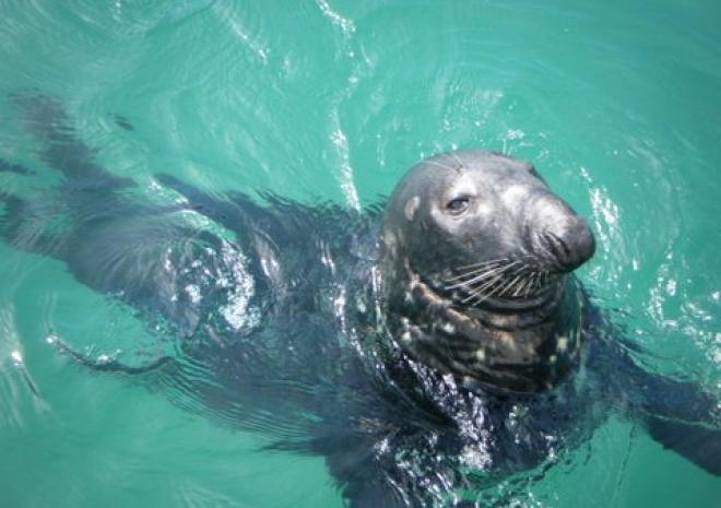 Atlantic Diving, Newquay, Seals, Snorkelling, Boats, Cornwall