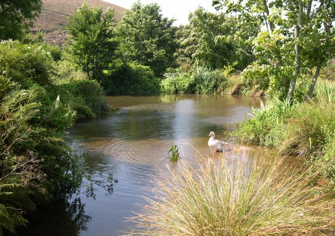 Old Basset Cottage offers lovely self-catering holiday accommodation near Porthtowan in North Cornwall - Our pond in out extensive mature garden grounds