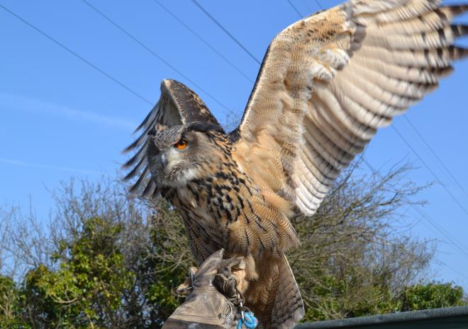 Things to do in Cornwall | Screech Owl Sanctuary | St Columb | Cornwall
