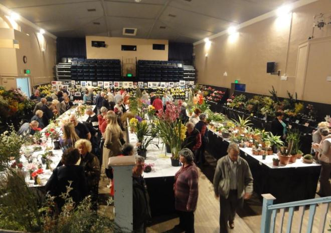 Falmouth Spring Flower Show | Cornwall