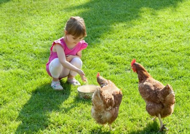 Farm holiday animal feeding Cornwall St Austell
