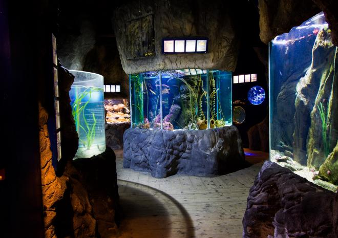 Inside Blue Reef Aquarium, Newquay, Cornwall