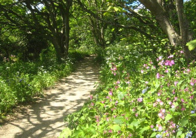 Path to Nansidwell Beach, Falmouth, Cornwall