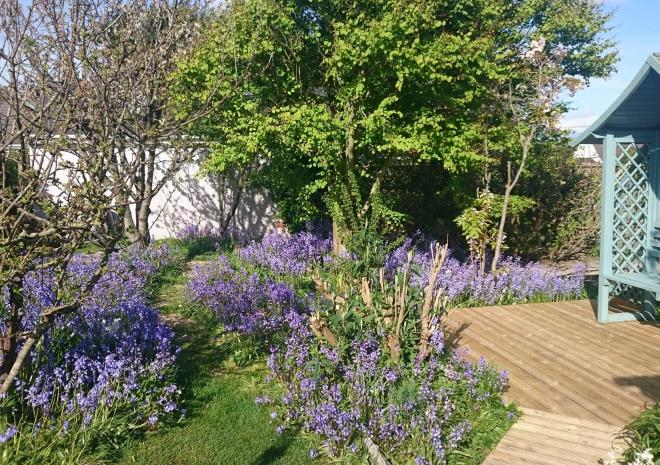 Orchard Cottage Sprintime Garden, Yellow Sands Cottages, Harlyn Bay, Padstow, Cornwall