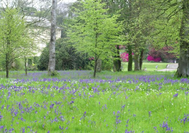 Gardens in Cornwall |Pencarrow House and Gardens | Bodmin