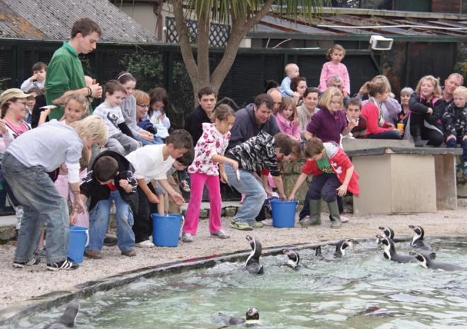 Penguin Feeding Paradise Park and JungleBarn, Things to do,  Hayle,  St Ives, Cornwall