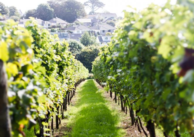 Polgoon Vineyard & Orchard | Penzance | Cornwall