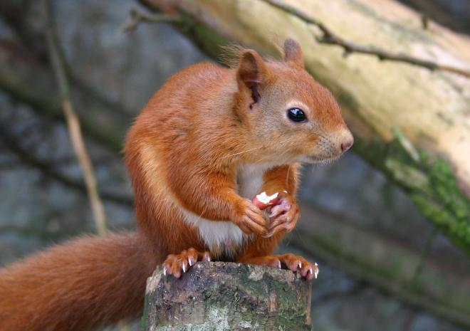 Red Squirrel Paradise Park and JungleBarn, Things to do,  Hayle,  St Ives, Cornwall