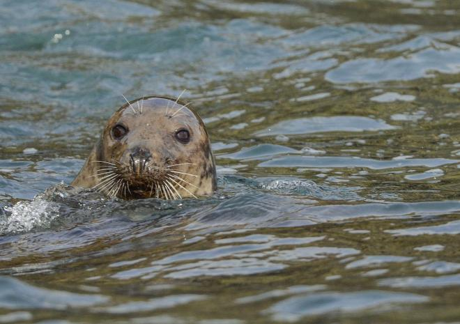 AK Wildlife Cruises | Sea Safaris | Falmouth | Cornwall