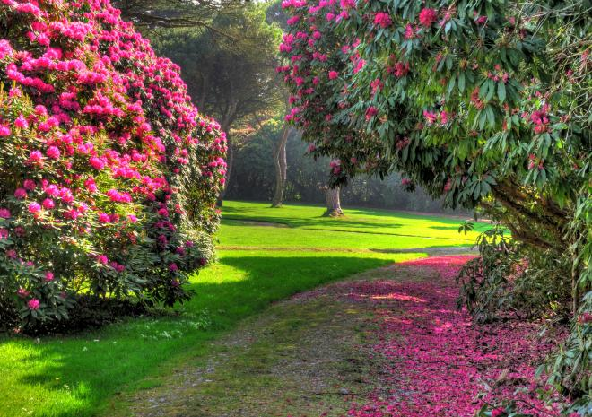 Tregothnan, Charity Garden Opening, Cornwall, gardens, event, what's on