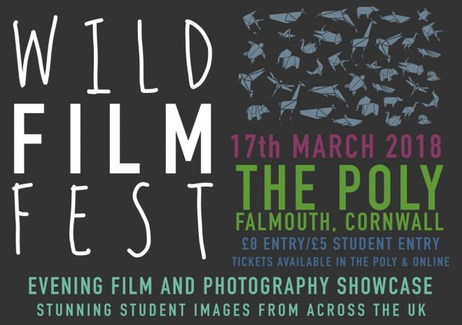 Wild Film fest, The Poly, Falmouth, Visit Cornwall