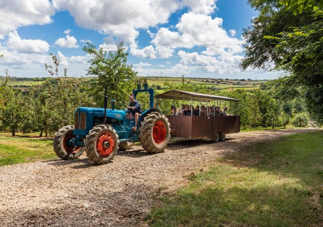 Things to do in Cornwall , Healeys Cornish Cider Farm , Truro , Cornwall