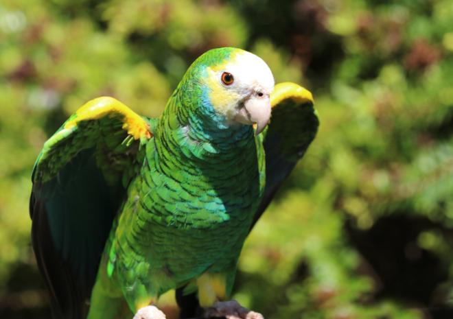 Amazon Parrot Paradise Park Hayle Cornwall