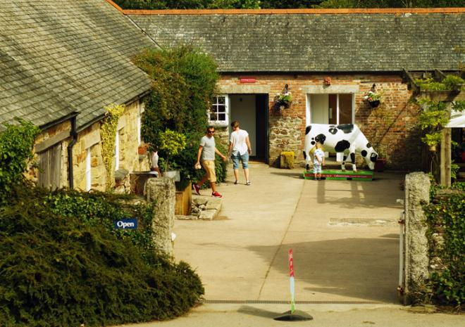 Callestick Farm, Cornwall, icecream, farm, animals, factory, cafe, attraction