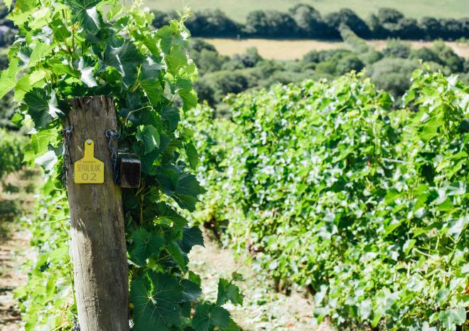 Cornish Wine Tours, Cornwall, Wine tasting