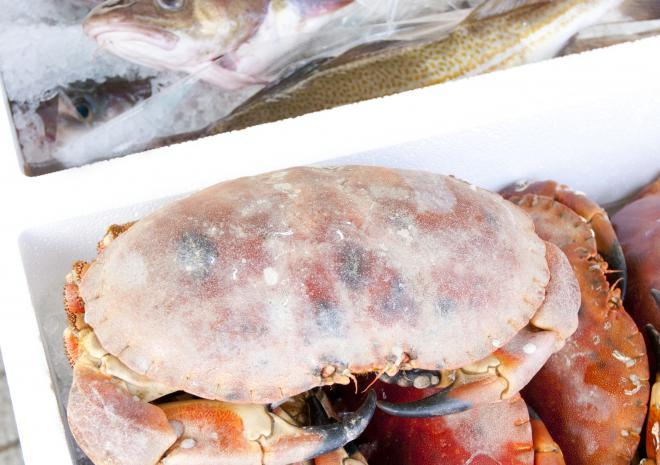 A selection of local fresh fish, available on the door step every Monday morning